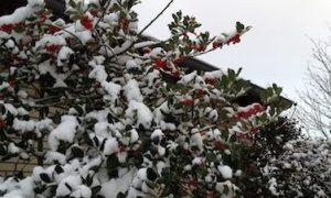 winter_berries_berlin