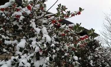 winter_berries_berlin
