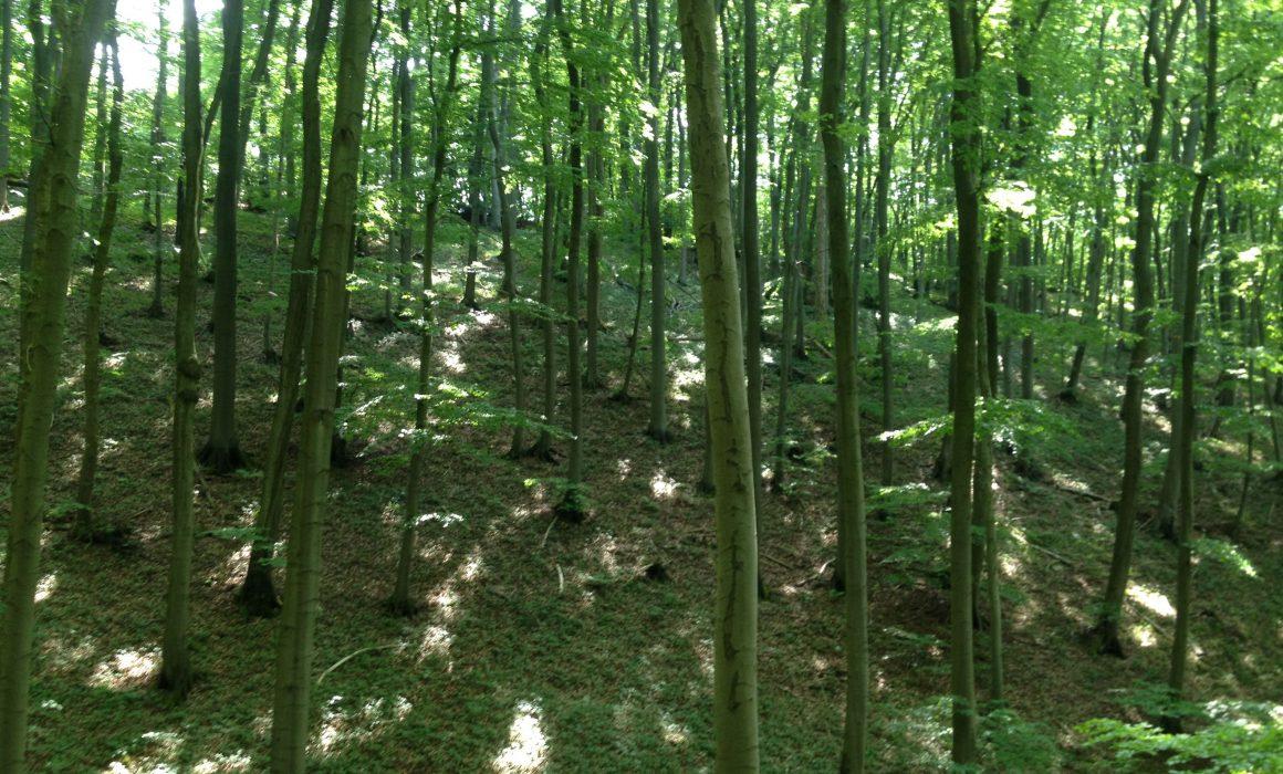 Gruenewald forest in Berlin