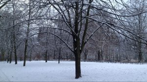 Tree and park with snow in Berlin