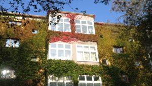 Hose with leaves, Berlin Prenzlauerberg